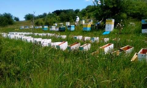 ένα ακόμη μελισσοκομείο μας ΒΥΣΣΙΝΙ ΜΕΛΙΣΣΑ