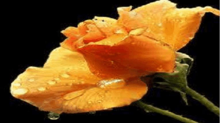 Puisi tentang ingin melupakan seseorang