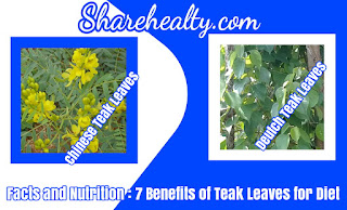Facts and Nutrition : 7 Benefits of Teak Leaves for Diet