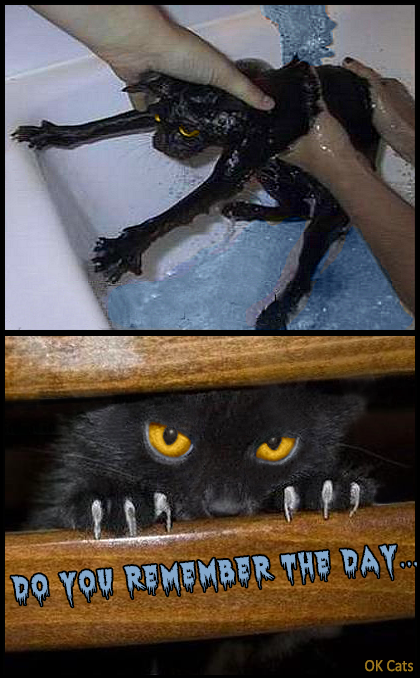 Photoshopped Cat picture • Angry cat: Do you remember the day when you humiliated me in the bathtub [ok-cats.com]