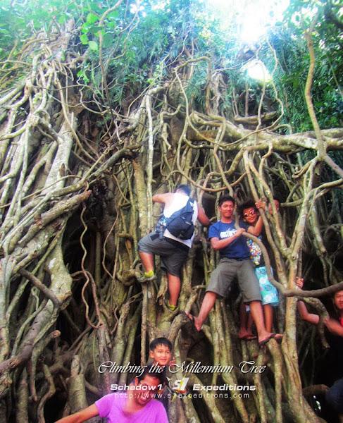 Millennium Tree - Aurora - Schadow1 Expeditions