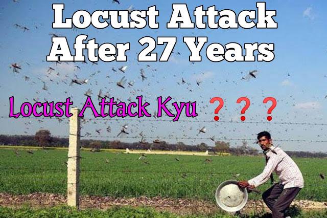 locust-attack-in-india