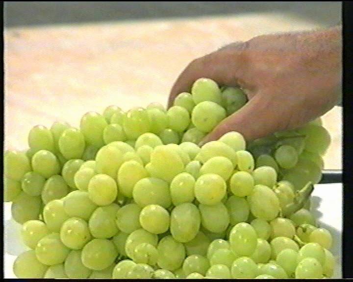 Fitosofia uva de mesa - Variedades de uva de mesa ...