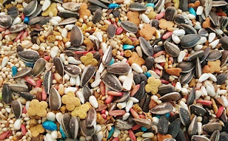 bird pellets