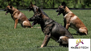 أفضل صور الكلاب المتنوعة