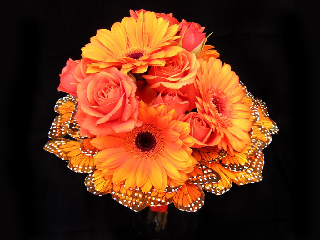 wallpaper: Orange Gerbera Daisy Flowers Wallpapers