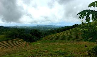 Cadapadapan Rices Terraces & Can-Umantad Falls Candijay Bohol