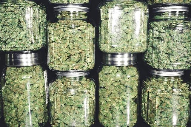 profitable cannabis business ideas marijuana startup models