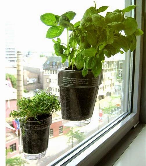 Arredo in vasi particolari per piante aromatiche in cucina for Vasi per piante