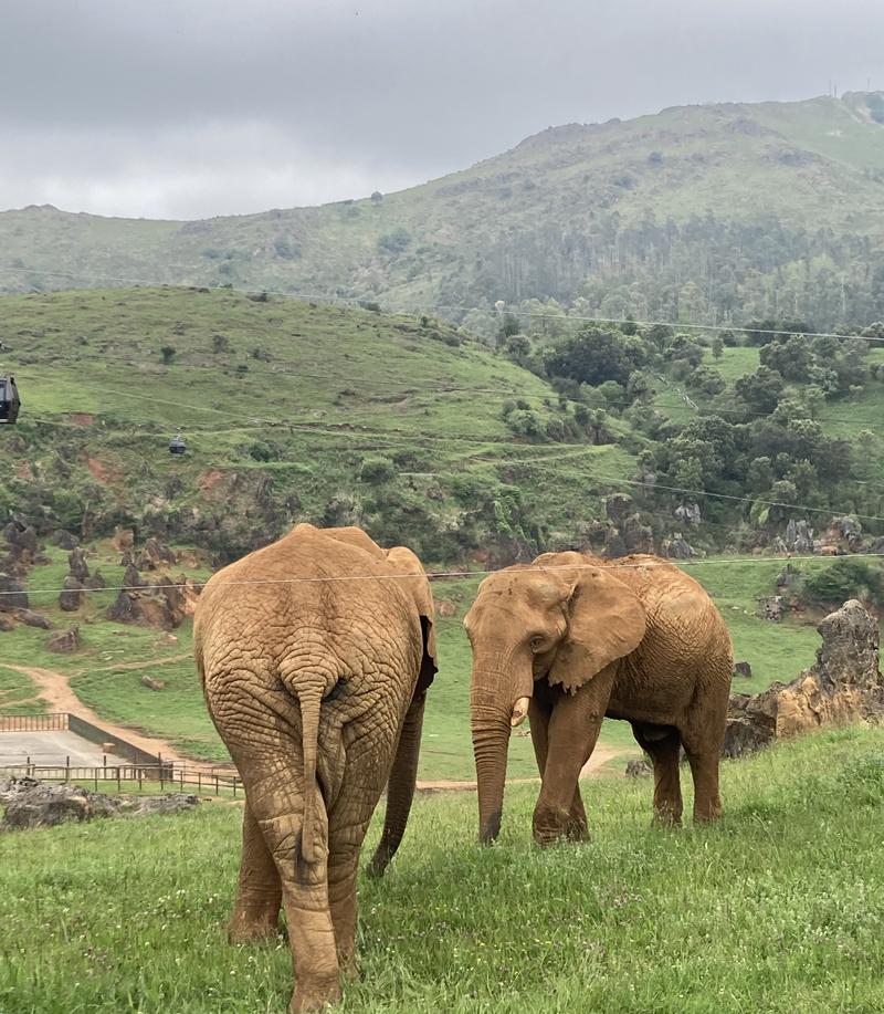 Parque natural Cabárceno elefantes