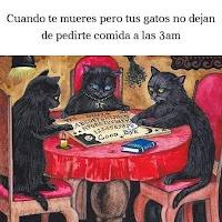 gatos y la ouija humor