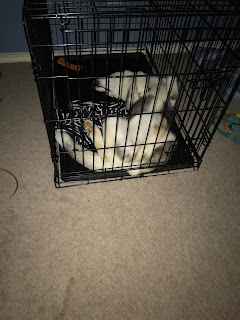 Husky crate training amazon san antonio texas