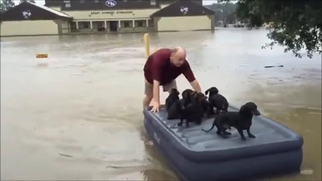 Во время сильного затопления мужчина спас соседских щенков