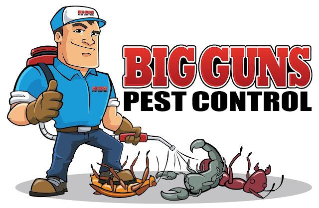 افضل شركة مكافحة الحشرات بالمدينة المنورة