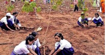 paragraph writing: Tree Plantation