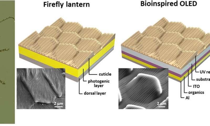 Comparação entre a estrutura do vaga-lume e a criada pelos pesquisadores.