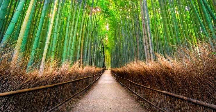 Sagano Bambu Ormanı, Japonya'da bulunan ilk ses manzarasına sahip yerdir.