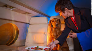 traveling with pets, pet airlines, pet friendly airlines, pets, flight with pets