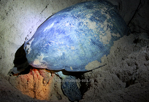 Sabah Turtle Island