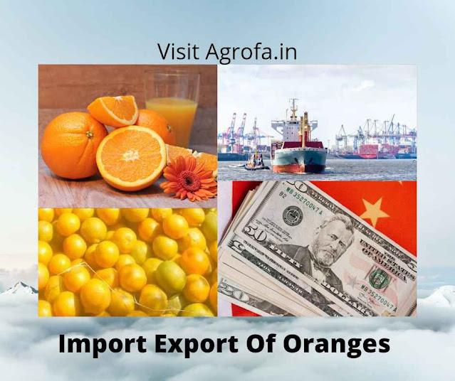 Import Export Oranges