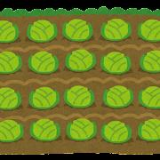 キャベツ畑のイラスト