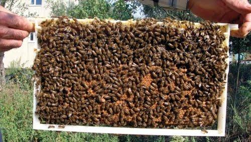 Τρόποι εξίσωσης μελισσιών: Πως δυναμώνουμε τα μικρά μελίσσια και πρόληψη για σμηνουργία!!