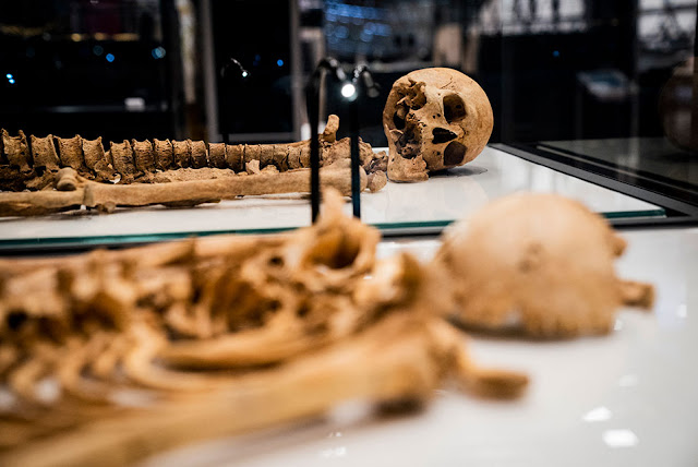 Two Viking relatives reunited in Denmark after 1,000 years