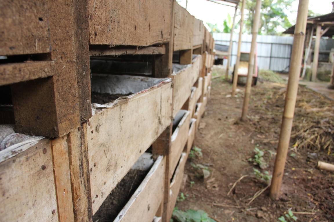 Cara Membuat Kandang Yang Sehat Untuk Ternak Cacing