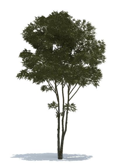 AM TREE MODEL 01 | 2D & 3D PLANTS FOR ARTLANTIS