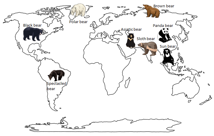 the eight different types of bears found throughout the world Bears from all over the world  for the bears below are the eight living species  of bears, six of which are listed as either endangered or vulnerable by the iucn.