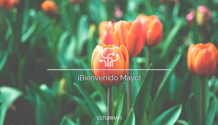 Bienvenido mayo tulipanes
