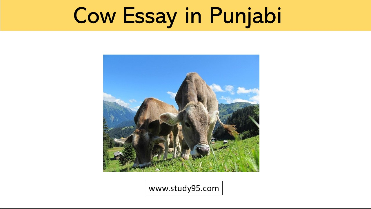Lines on Cow in Punjabi