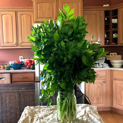 celery stalks in a mason jar