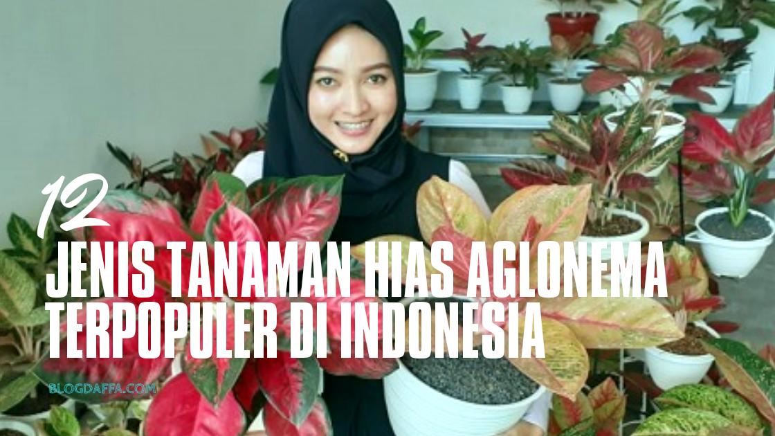 Jenis Aglonema yang Paling Populer di Indonesia
