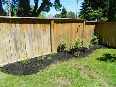 Toronto Leaside new side garden bed installation after by Paul Jung Gardening Services