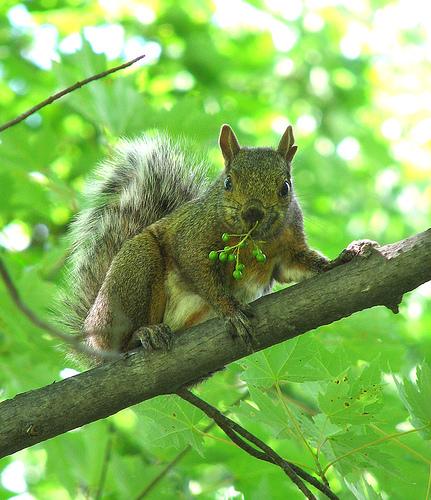 Sugar Glider Food, Dried Mealworms, Sugar Glider Cages ...   Baby Squirrel Diet