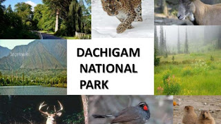 Places to visit in Jammu and kashmir (Dachigam national park)