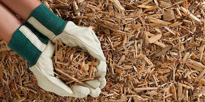 How to sterilize wood chips?