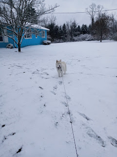 My Dog Pi in the Snow