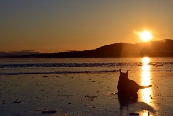 labrador i solnedgang