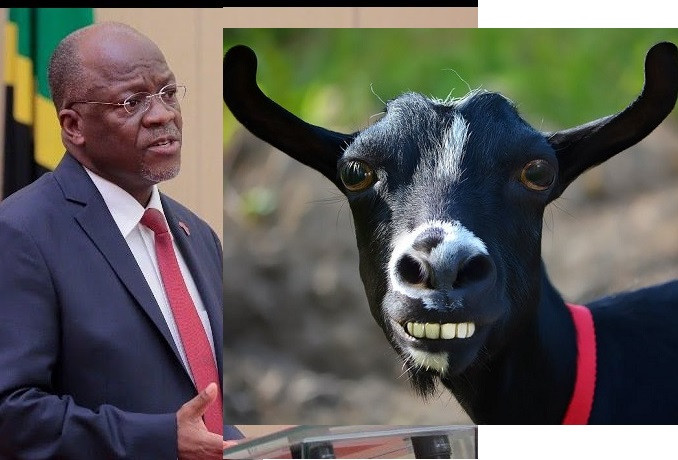 Tanzanian President Magufuli orders probe on COVID-19 kits after goat and pawpaw test positive for Coronavirus