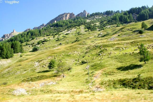 Vista dei pascoli sul Colle della Maddalena
