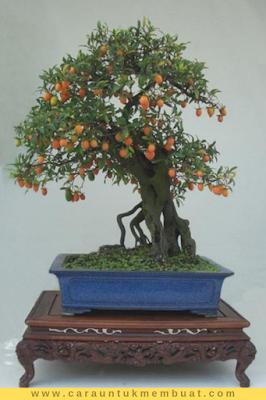 Bonsai Kesemek