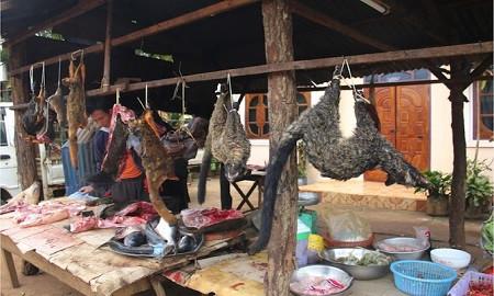 চীনে আবার চালু হলো বন্যপ্রাণীর বাজার