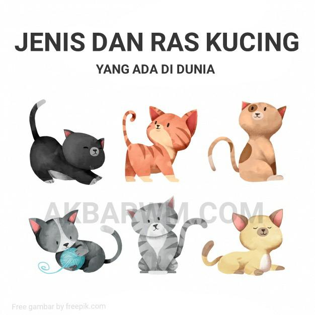 Jenis dan ras kucing