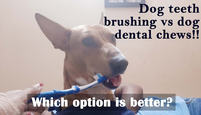 Dog teeth brushing vs Dental chews, which is better?