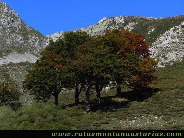 Ruta de los Arrudos y Corteguerón: Árboles otoñales
