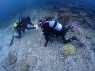 2021年4月6日の柏島ダイビング