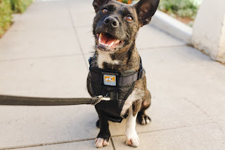 Bark Collar - What You Need to Know ?