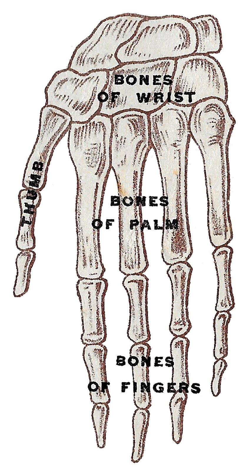 Antique Images Free Vintage Human Anatomy Illustration Images Eye